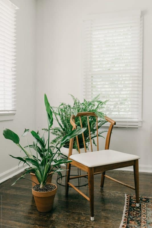 mid century decor with house plants
