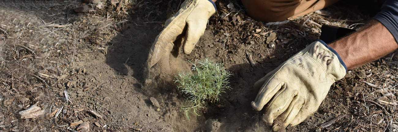 planting a tree   byBespoek
